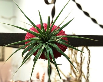 holiday magnet fiesta no.1 //  air plant tillandsia // by robincharlotte