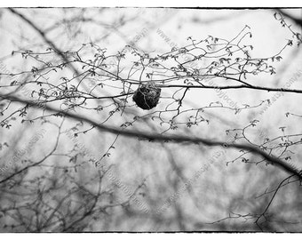 Small Bird's Nest in Tree Branches Moody Wrapped Canvas Photo Print