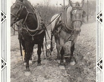 Original Vintage Small Photograph Snapshot Work Draft Horses in Harness Collars 1920s-30s