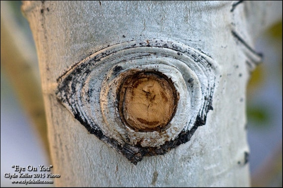 EYE ON YOU, tree limb cross section, Clyde Keller Photo, Fine Art Print, Color, Signed