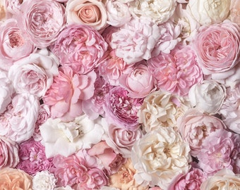 Rose Wall Decor flower photography the french flower market roses