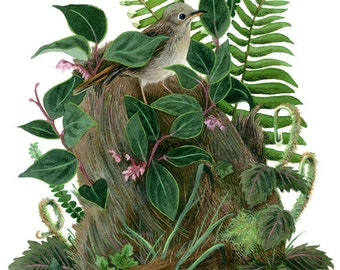 Fine Art Print of Original Watercolor Painting - Nurse Log