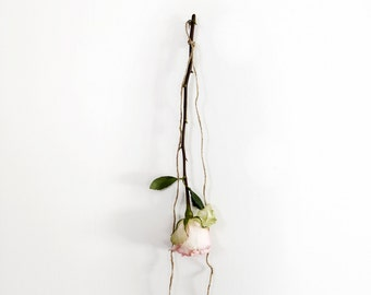 Modern Still Life of a Pale Pink Rose on a white wall