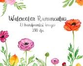 Watercolor Ranunculus Flowers, Floral Clip Art, Watercolor Flower Clip Art, Handpainted Graphics, Floral Elements, Instant Download, Digital