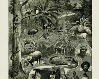 1905 Antique Australian fauna print. Original antique didactic animal chart, kangaroo, emu, indigenous Australians, wildlife Australia