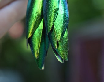 Beetle Wing Earrings - Ethically Harvested, Iridescent, Insect, Bug Jewelry, Thailand, Gift, Entomology, Geek, Rainforest, Shiny, Light