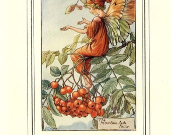 The MOUNTAIN ASH FAIRY  Original Antique c 1940 Color Plate The Book of Flower Fairies Cicely Barker
