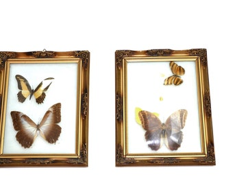 Vintage Butterfly Pictures Butterfly Wall Hangings REAL Butterflies Antique Convex Glass Baby Nursery Babies Buterfly Nursery