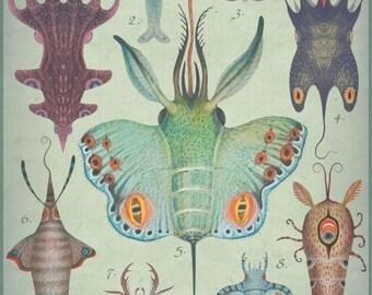 Cephalopodoptera tab I - Art print