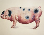 Pig painting - Gloucestershire  old spot watercolor print