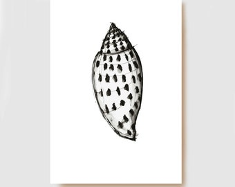 Shell V- Fine Art Print, shell print, shell wall decor, modern shell print, modern shell art, sea shell art, shell illustration print, art