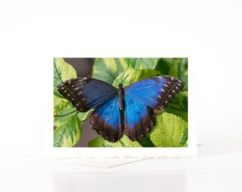 Blue Morpho Butterfly Cards, Blank Photo Greeting Cards, Butterfly Photographs, Photos, Prints, Nature Photography Cards, Cards Sets