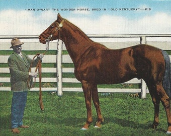 The Wonder Horse - Vintage 1940s Postcard, Man o'War and Groom Will Harbut
