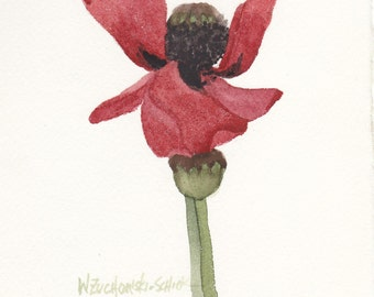 Red Poppy Original Watercolor 3