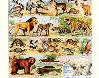 1948 Vintage animal art French wall art Wildlife art Antique mammals poster Animal gift Animal decor Wildlife decor Wildlife poster