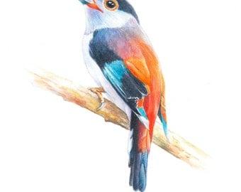 Bird, art, bird print, Watercolor, original watercolor painting, Wall art print, Silver-breasted broadbill----watercolor giclee print