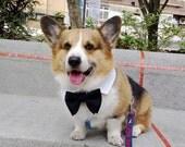 Dog Ring bearer bow tie point collar set White shirt collar detachable black bow set Wedding formal bow collar for medium large dogs (MM-ML)