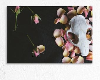 Beaver Skull and Rose Petals Fine Art Photography