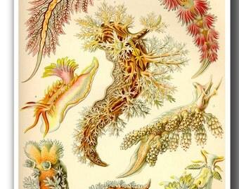 Ernst Haeckel Art Print, Sea Slugs Poster, Nautical Creatures from Vintage Scientific Illustration, Marine Life Print, Educational Art