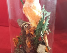 ANTIQUE Victorian Inspired CANARY Serinus canaria domesticus glass dome display-parakeet-bird-beautiful!