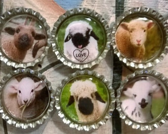 Six Cute Lambs Magnets on Silver Bottle Caps