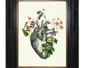 Flowers growing on Anatomical Heart II Love - Victorian Steampunk art print Gothic Morbid