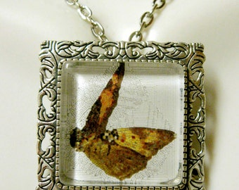 Butterfly convertible pendant or brooch with chain - WAP35-007
