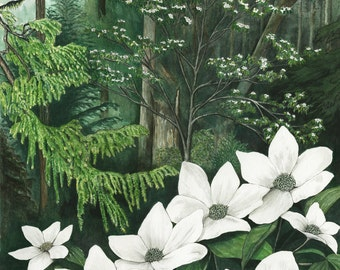 Pacific Dogwood in the conifer forest