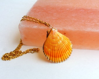 Mermaid seashell necklace- the orange scallop (shell necklace, scallop, gold trimmed shell, seashell, mermaid necklace)