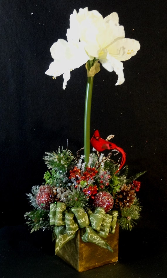 Sale elegant christmas arrangementchristmas amaryllis for Amaryllis christmas decoration