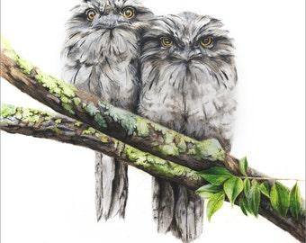 "Tawny Frogmouths - Australian Bird Art - Wildlife - Owls - Art Print - Woodland - 12x16"""