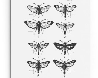 Moth Collection Print. Modern Vintage Insect Poster. Entomology Art. Scientific Illustration. Educational Chart Wall Art. Black White Print.