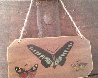 Door wall decoration Cabinet of curiosities #3 plate / / butterflies