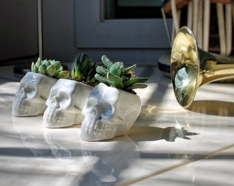 Human Skull planter with succulent