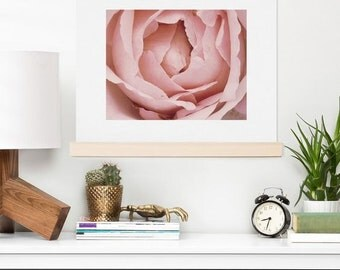 Art Print ~ Floral Pink French Rose Photograph, romantic pastel home decor, pink floral petals, dreamy dorm decoration, flower wall art