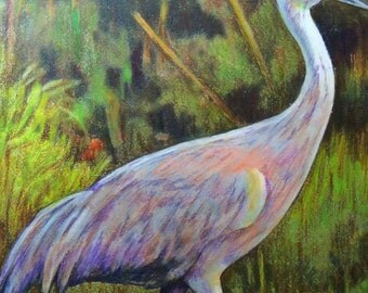 original art drawing sandhill crane bird