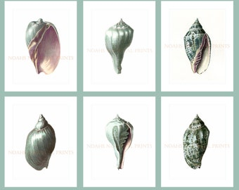 Sea Green Shell Prints Set of 6 Prints. Green Seashell Prints. Beach Decor Home and Living Decor. Guest Room DecorBathroom Seashell Art