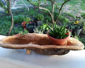 Vassoio di sughero vassoio di sughero naturale grande - Sughero pianta da giardino ...