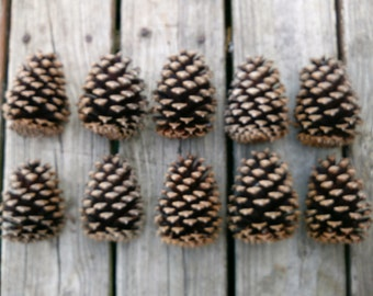 Pine Cones 10 Real and Natural S.E. Georgia Slash Pine Cones all Approx 4 Inches Long  Hand Qulity Selected Hobbies / Crafts and Wreaths