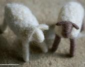 Sheep wool, Waldorf inspi...