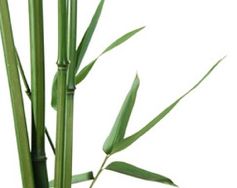 Fragrance Oil - Bamboo - for Soaps, Candles and B&B Products