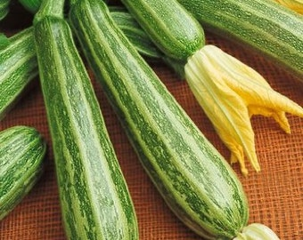 Zucchini Seeds Zucchini Italian Striped 100 Summer Squash Seeds