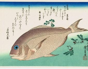"Japanese Ukiyoe, Woodblock print, antique, Hiroshige, ""Sea Bream & Japanese Pepper"""