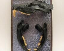 Opossum Skull Display - Curiosity - Oddity - Animal Bone Specimen - Creepy Decor - Real Animal Skull