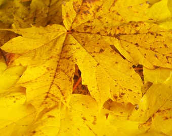 Yellow leaf pattern direct download, nature photo instant download, autumn photography, wall art, home decore, printable yellow picture