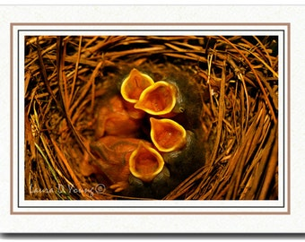 All Occasion Card, Photo Greeting Card, Baby Blue Birds, Handmade Card, Bird Crying in Nest, 5x7 Blank Card, Fine Art Print, Photo Note Card