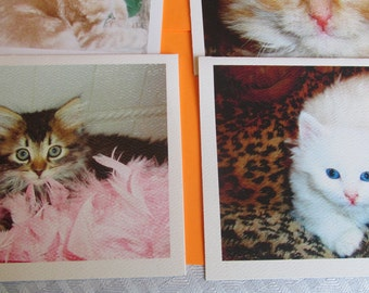 Cat and Kitten Note Cards made from pictures taken by a friend of mine, who fosters kitten and cats, they are so cute