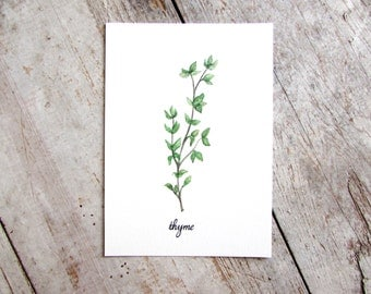 Thyme Watercolor Illustration Art Print Kitchen Herbs