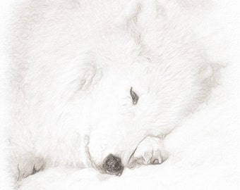 Arctic wolf fine art print ~ 20x20
