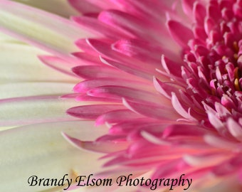 Pink and White Daisy Phototgraphy Wall Hanging Wall Decor Bedroom Decor Office Decor Flower Photography Summertime Color Frameable Photo
